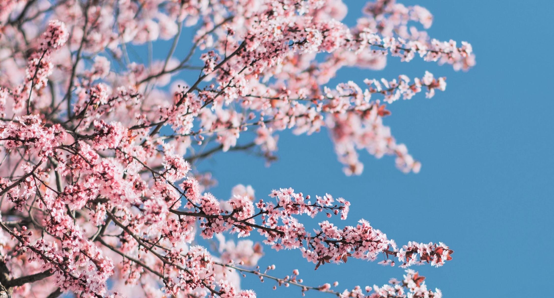 star-bene-in-primavera