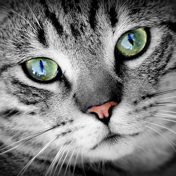 il-mio-gatto-e-sotto-stress