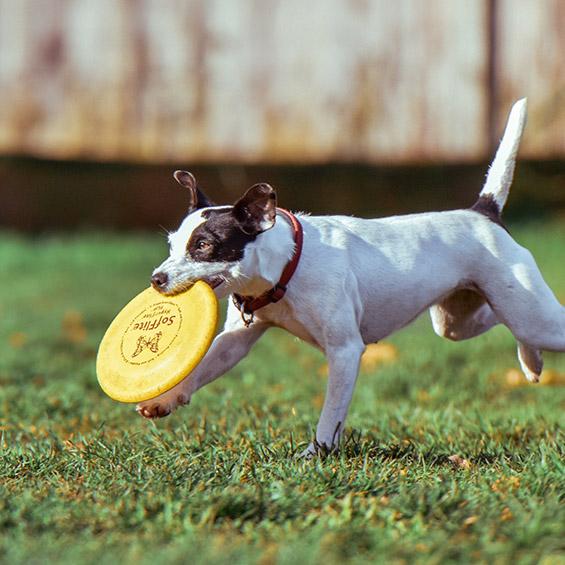 'suggerimenti-per-mantenere-la-salute-delle-articolazioni-del-vostro-animale-domestico