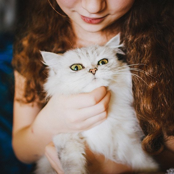 'come-capire-il-comportamento-del-tuo-gatto