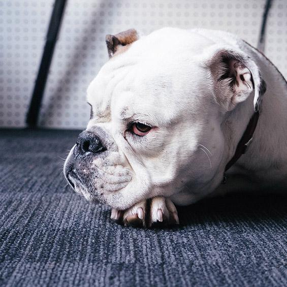 'perche-il-mio-cane-non-dorme-durante-la-notte