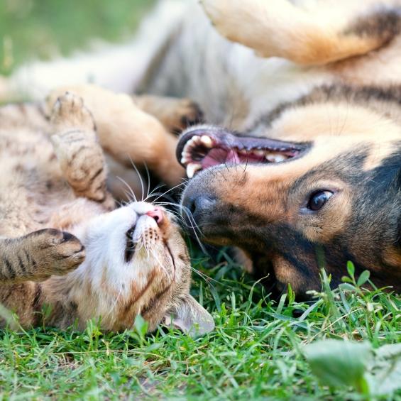 Artrite e problemi articolari dei cani e dei gatti