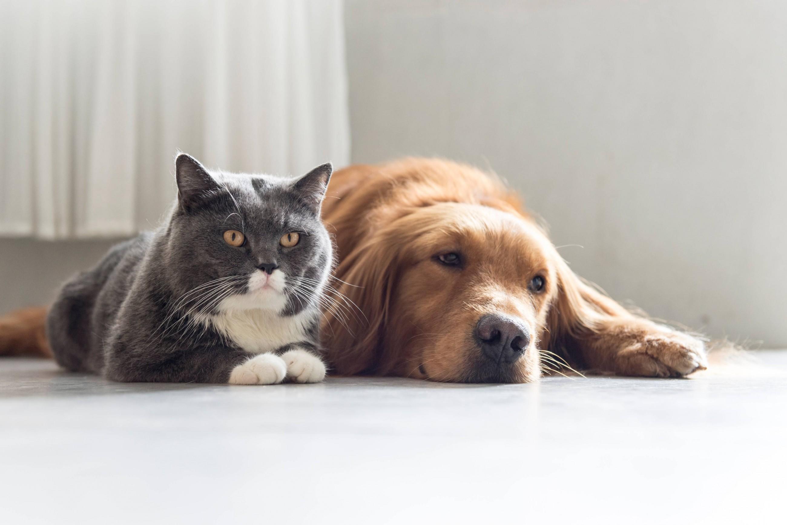 artrite-e-problemi-articolari-dei-cani-e-dei-gatti