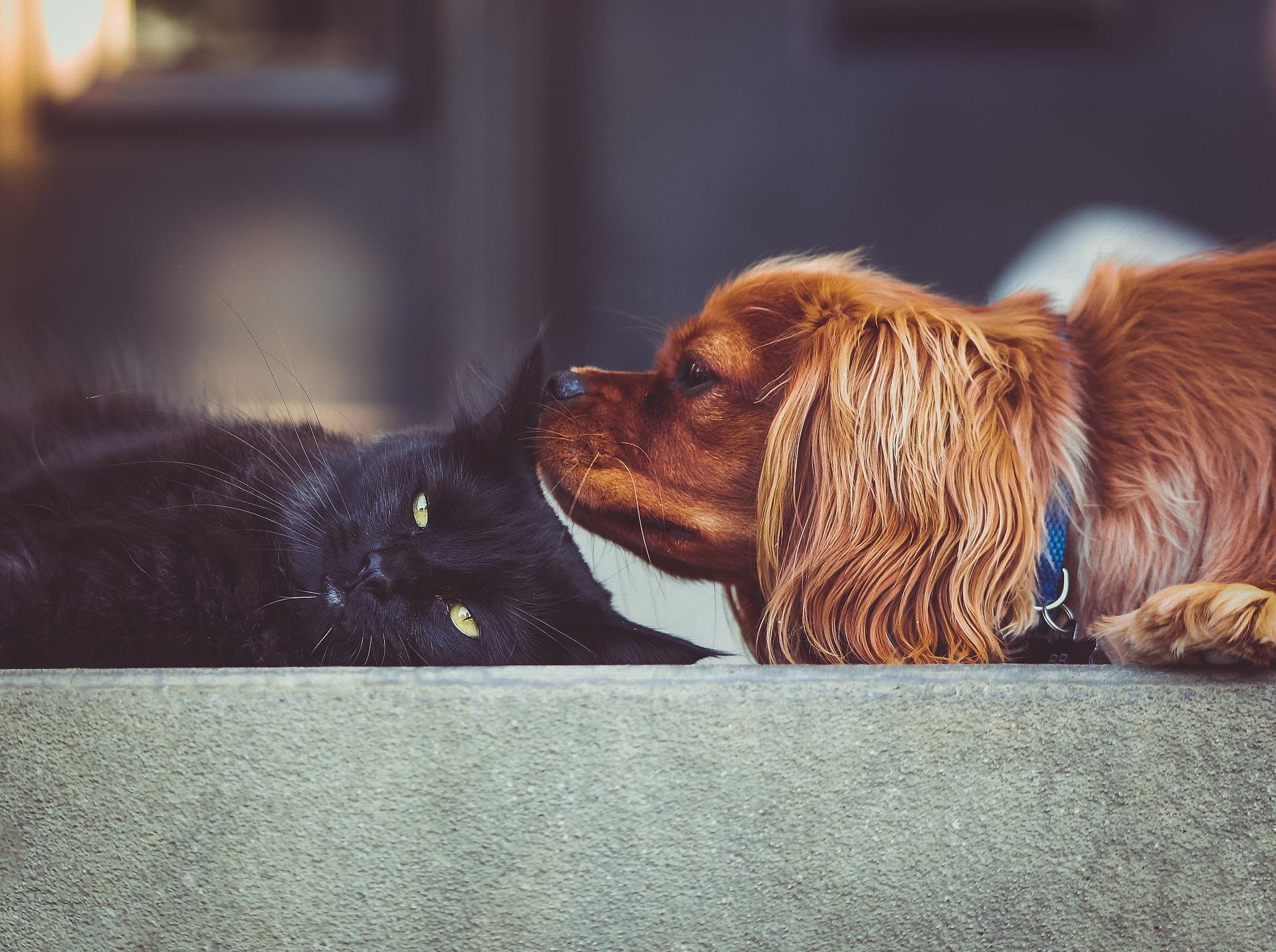 il-problema-dell-obesita-nei-cani-e-nei-gatti
