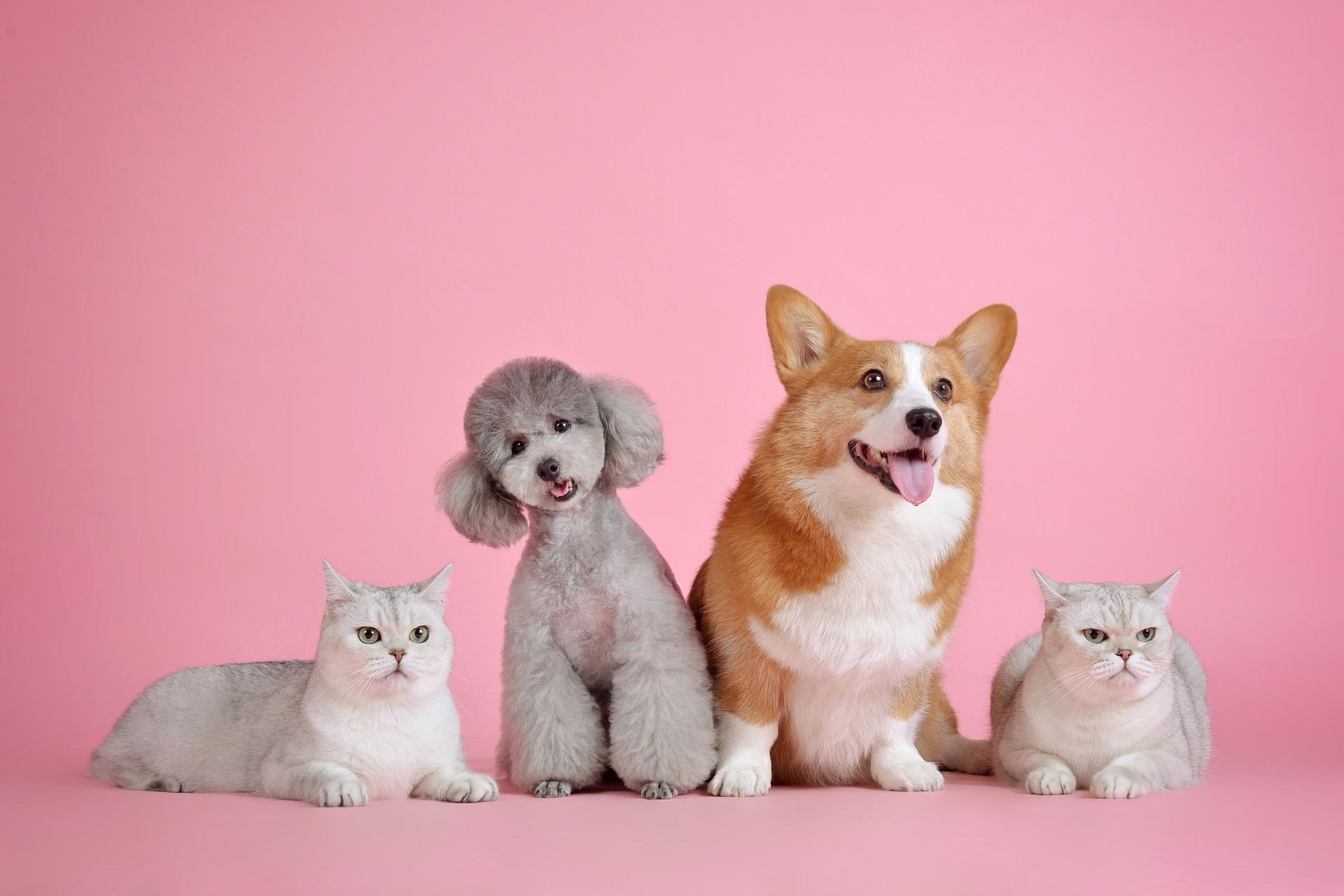 'soddisfare-le-esigenze-dei-cani-e-dei-gatti-anziani