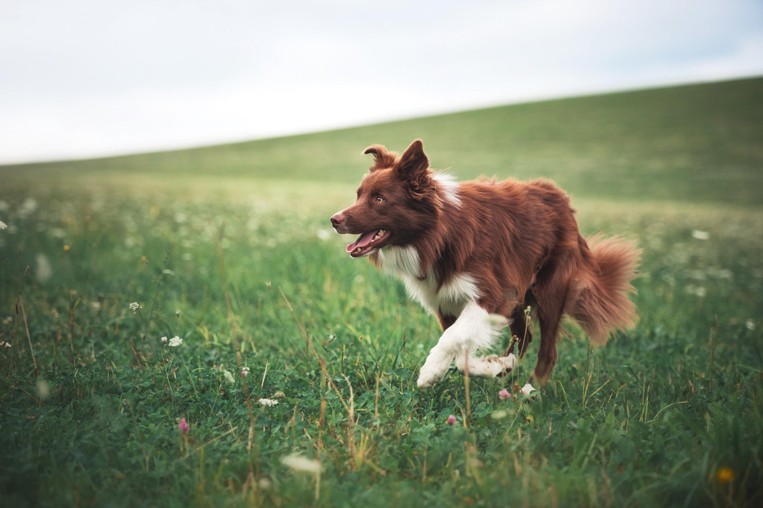 suggerimenti-per-mantenere-la-salute-delle-articolazioni-del-vostro-animale-domestico